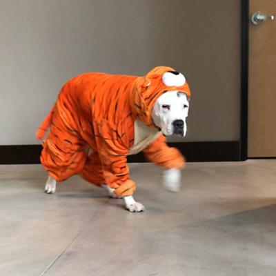 Meet DogBot